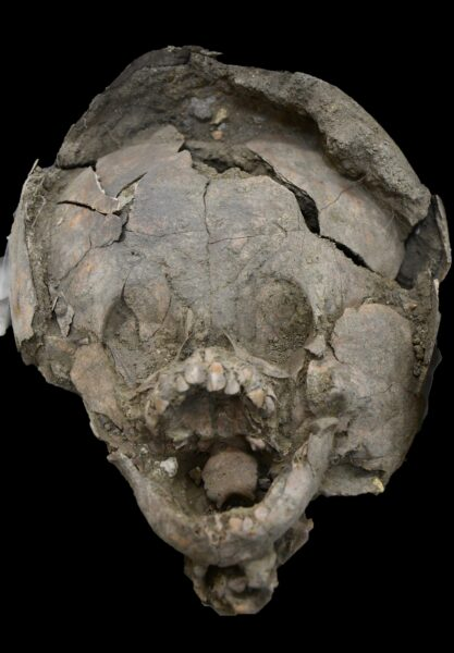 Skull of infant found in ancient burial mound.